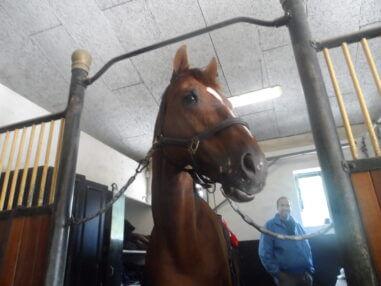 horse energy computermeting voor alle paarden