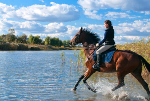 Paard en ruiter in balans