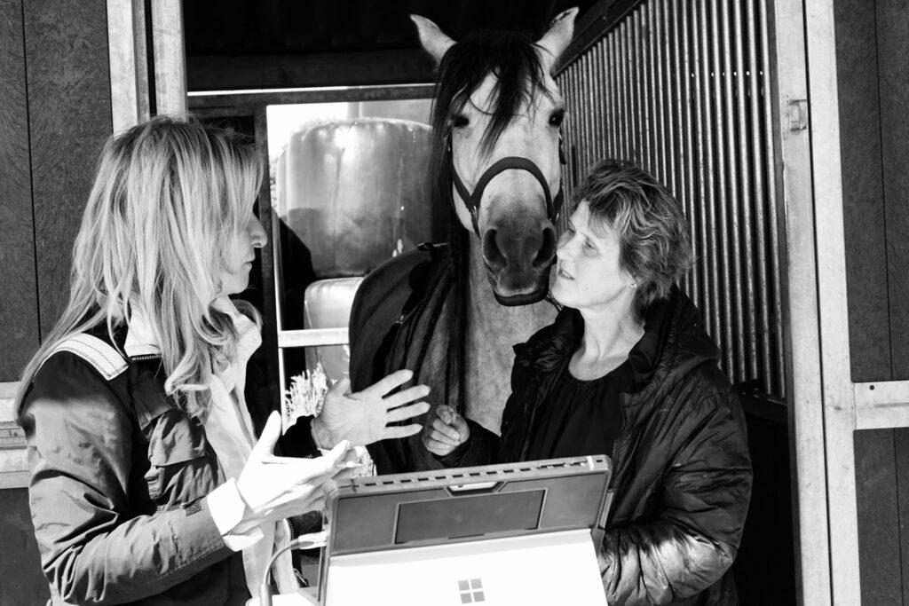 horse energy computermeting gedrag paard